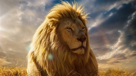 Lion King 4K Wallpapers | HD Wallpapers | ID #19926