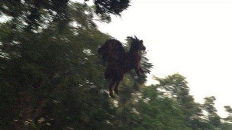 Jersey Devil sighting 'Devil' Is Pictured Flying Over A