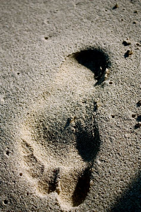 Man Fined for Hunting Bigfoot Without a Permit | OutdoorHub